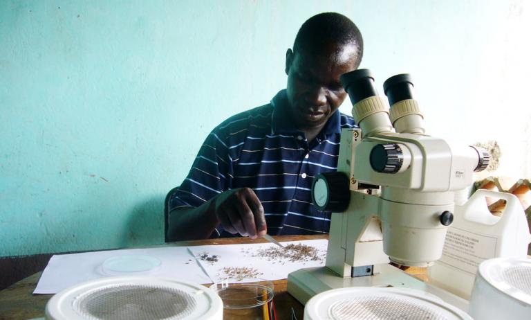 A malaria researcher sorts mosquitoes - KP Yohannan - Gospel for Asia