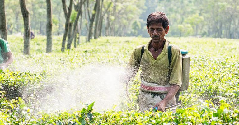 Tea plantation workers often only earn an average of $1.30 a day - KP Yohannan - Gospel for Asia