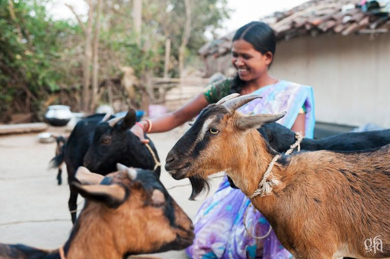 The Amazing and Empowering Impact of Chickens and Goats - KP Yohannan - Gospel for Asia