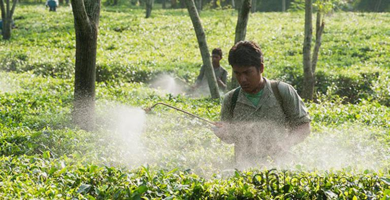 Much like these men working in a tea garden in Asia, Nalah and his family lived and worked long hours trying to scrape up enough money to live on. Often the wages simply weren't enough for his family.