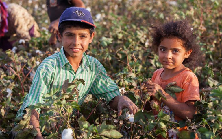 These children labor in Turkey's cotton fields in hard conditions. During cotton season, they cannot go to school.