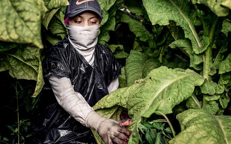 "This 17-year-old young woman began working on a tobacco farm in America when she was just 13 years old. She shared, ""None of my bosses or contractors or crew leaders have ever told us anything about pesticides and how we can protect ourselves from them...When I worked with my mom, she would take care of me, and she would like always make sure I was okay... Our bosses don't give us anything except for our checks. That's it."" © 2015 Benedict Evans for Human Rights Watch"