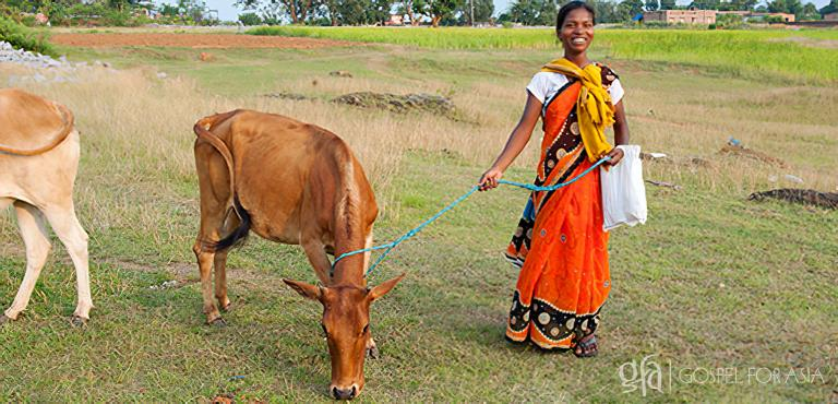 Gospel for Asia (GFA World) founded by Dr. K.P. Yohannan: Pastor Boro told his leaders about his concerns for Kalapi's family. Then, during a Christmas gift distribution, Kalapi received a cow and a calf!