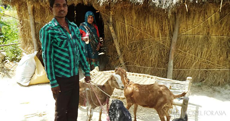 Gospel for Asia founded by Dr. K.P. Yohannan: When Dhansukh received two female goats through a Christmas gift distribution, God filled his heart with faith that Jesus loved him. Dhansukh cared for the goats, and soon they gave birth to three kids.