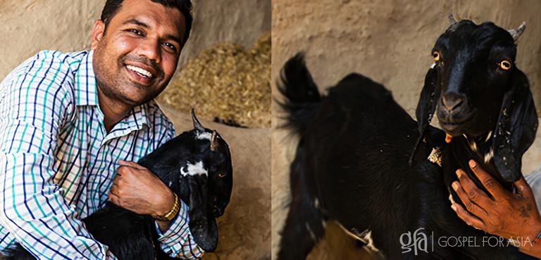 Gospel for Asia (GFA World) founded by Dr. K.P. Yohannan: Even though three of Dhansukh's goats were killed by dogs, he and his family have hope of future provision because his remaining goat is pregnant! By God's grace, gifts like goats can keep on giving.