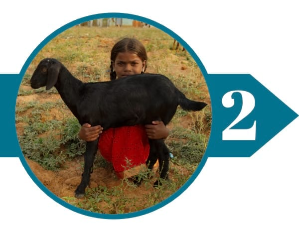 Giving Goats as Income-Generating Tools