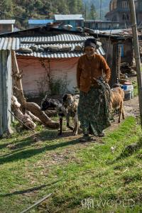 Discussing a widow & her family's struggle with poverty & sickness, and the Gospel for Asia distribution of a goat that took care of their medical needs.
