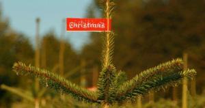 christmas_christmas_tree_buy-2