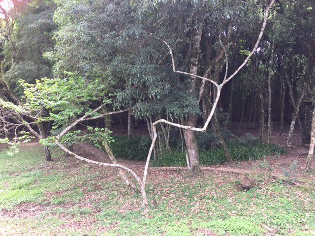 Tree Curitiba