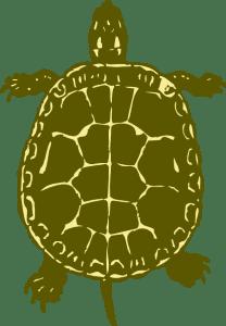 turtleisland