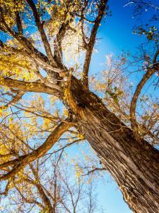 tall tree in sunlight