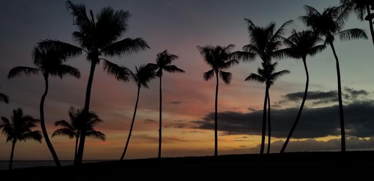 Mormon Gratitude Palm trees in sunset