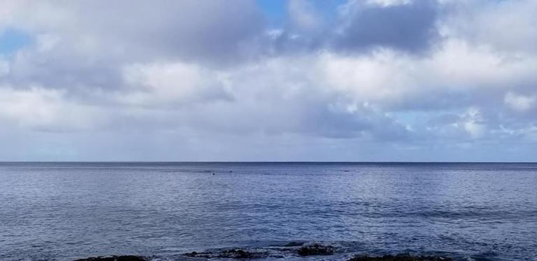 dolphins at Makua Beach