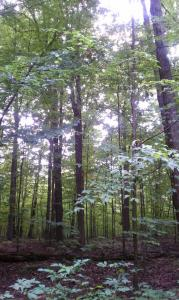 a vision for each of us sacred grove palmyra new york