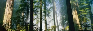 RedwoodForest_PatheosCover