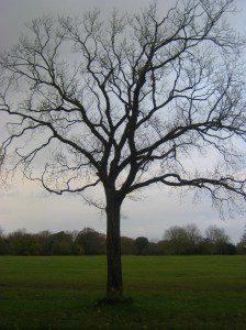 Single Tree - Bristol