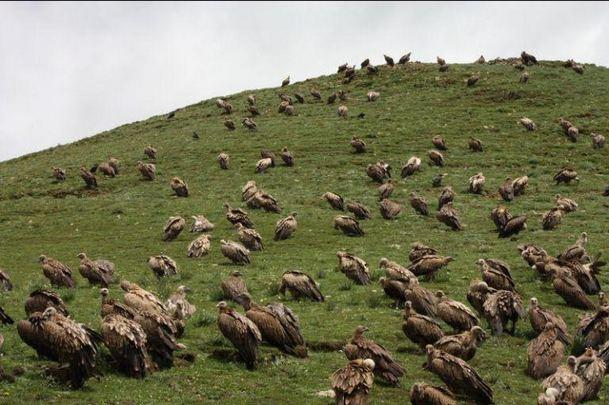 Tibetan-Sky-burial