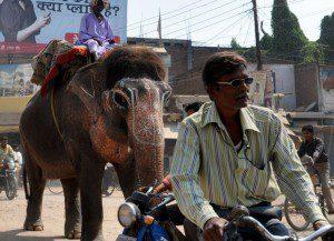 Elephant in Varanasi, India 2010