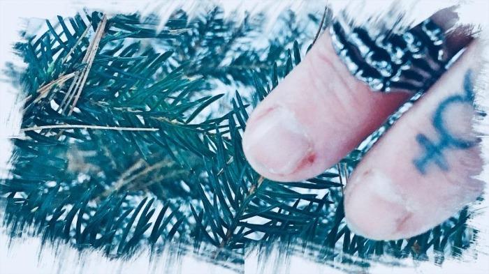 Blue Spruce Aglow...