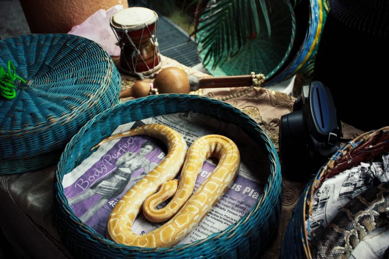 A snake curled up in a whicker basket