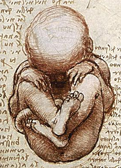 View of a Foetus in the Womb, Leonardo DaVinci