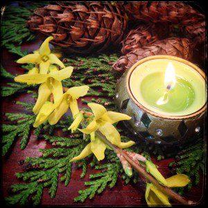 Forsythia Cedar Candle (cc 2016) Alison Leigh Lily