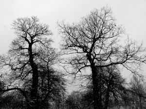 Naked Trees. Simon Booth-Lucking (cc) 2005.