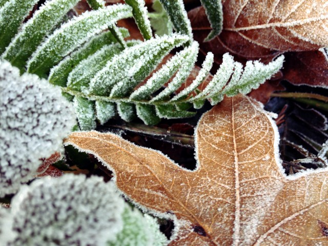 Fern Frost. Photo by Alison Leigh Lilly.