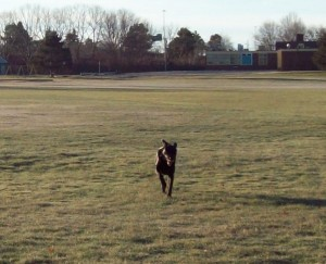 Bodhi running free. Photo by Low Tide.