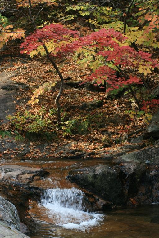 A small waterfall among fall foliage