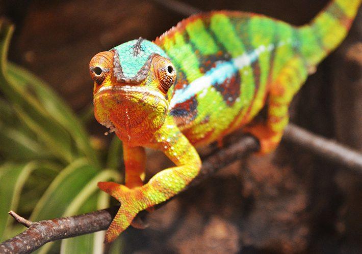 chameleon religion postmodernist atheist