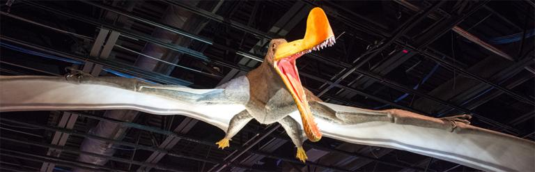creationism pterosaurs science dinosaurs religion