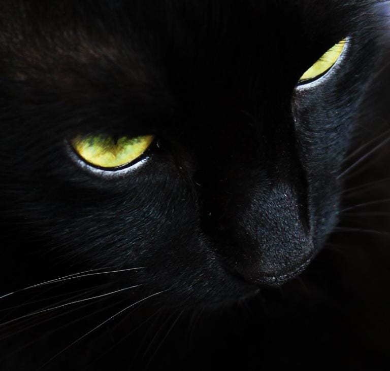 religion belief imagination christianity black cat