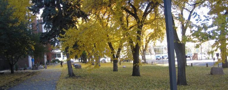 U of A autumn