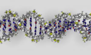 DNA Molecular model