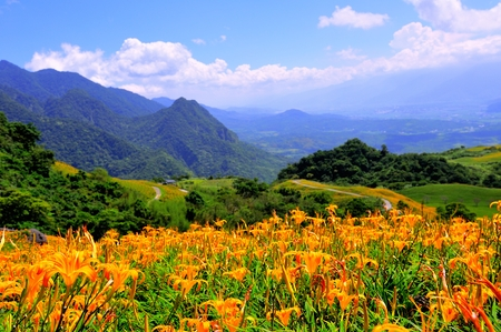 Lilies and Mountain