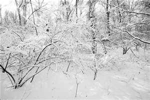 Fresh snow silently adorns trees and blankets the ground.