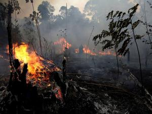 Amazon rainforests on fire.