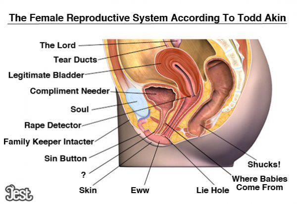 the female reproductive system according to todd akin. Black Bedroom Furniture Sets. Home Design Ideas