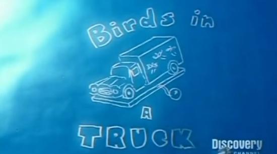 BirdsinaTruck