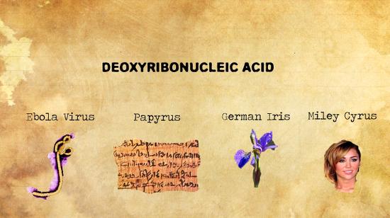 DNACyrus