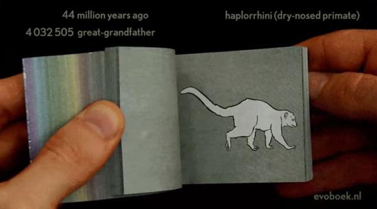 EvolutionFlipbook