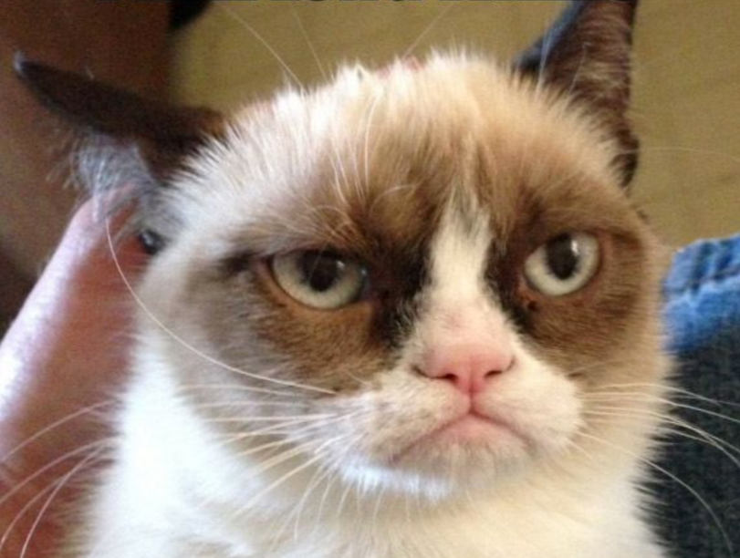 grumpy_cat_meme_-_Google_Search
