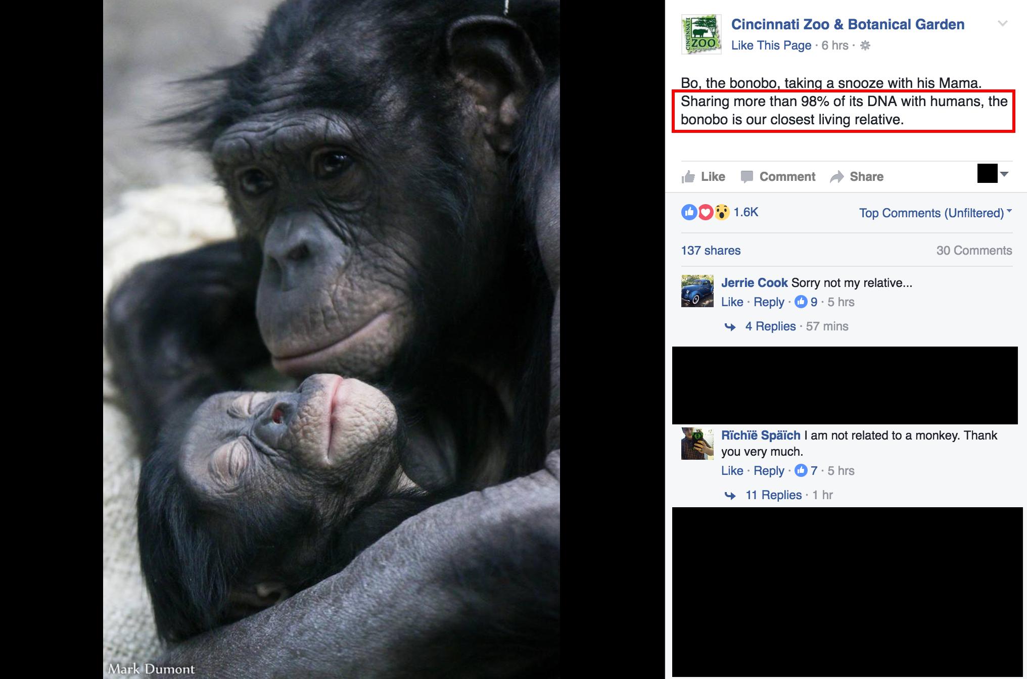 BonoboArgument2
