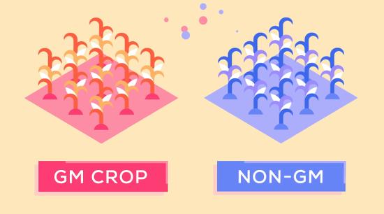 GMOKurzgesagt
