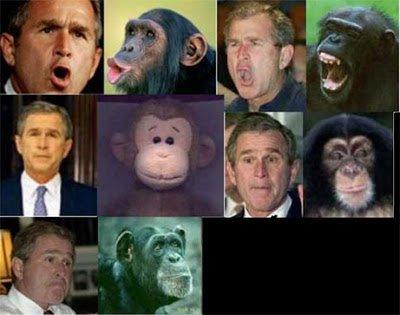 BushApeEvolution