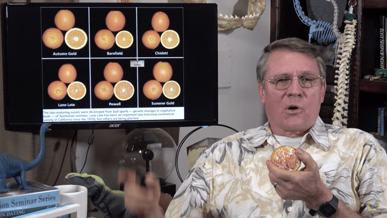 Creationist Kent Hovind Now Says Oranges Are Proof That Evolution is False
