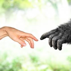 Poll: 61% of Canadians Accept Evolution While 23% Are Young Earth Creationists