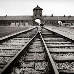 Holocaust Ignorance is Rampant Among U.S. Millennials, Survey Finds